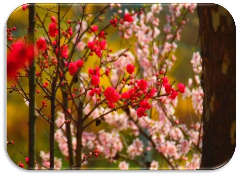 春德山桃花节