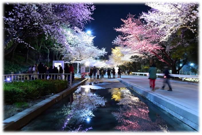 首尔LetsRun公园夜间樱花节