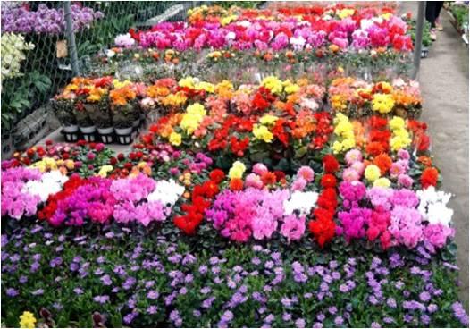 果川花卉批发市场