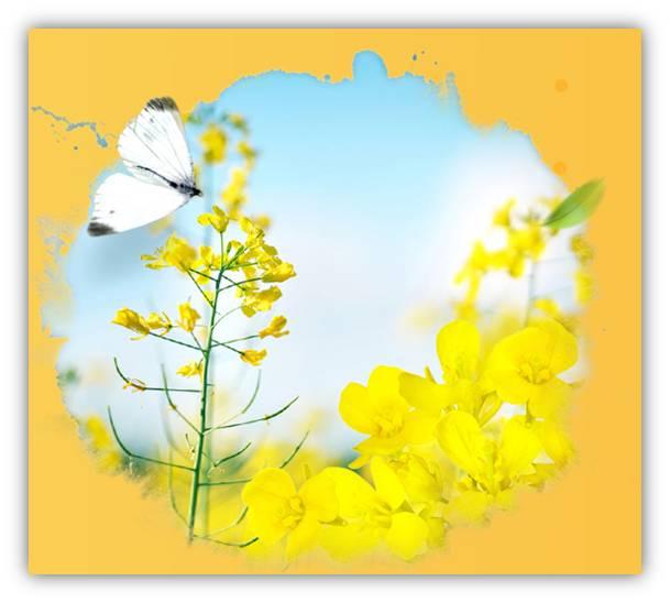 龙仁爱宝乐园油菜花节(5.3~5.21)