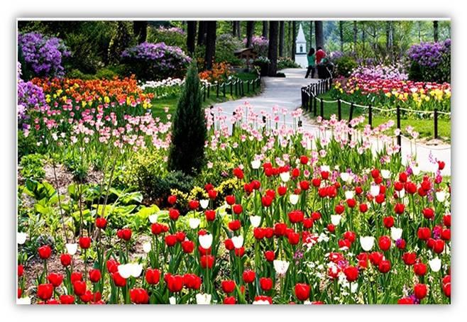 晨静树木园春花节(4.15 ~ 5.31)