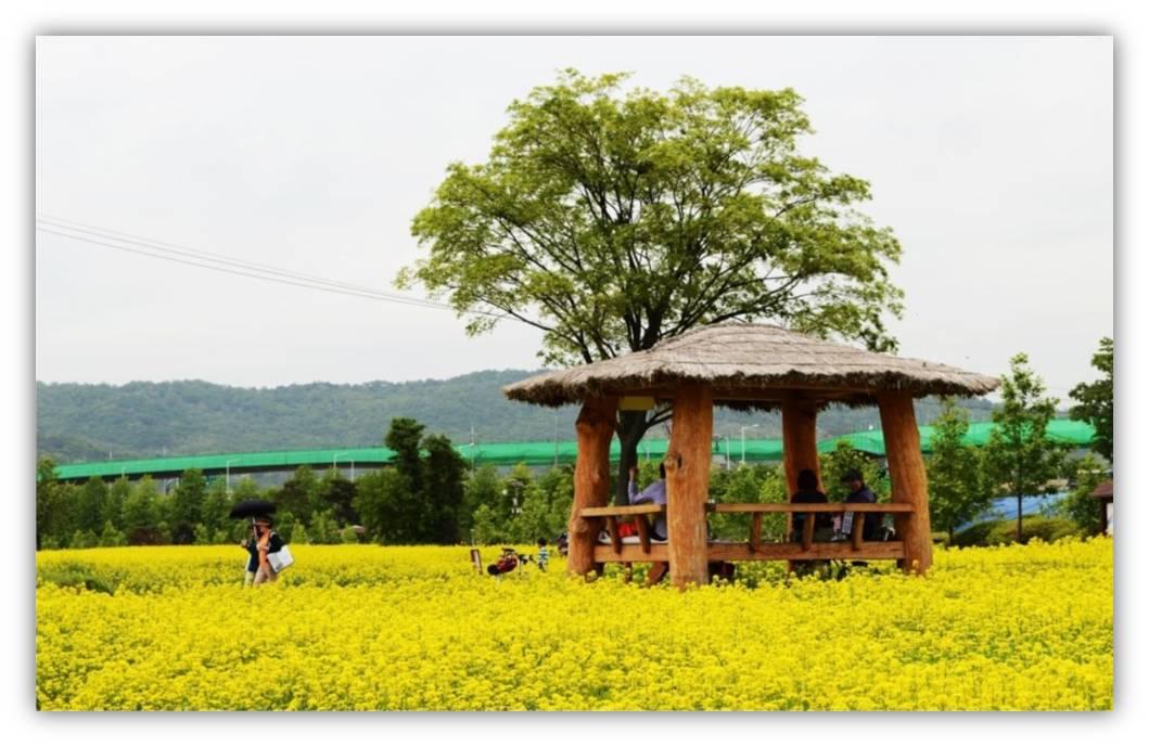 九里油菜花节(5.12 ~ 5.14)