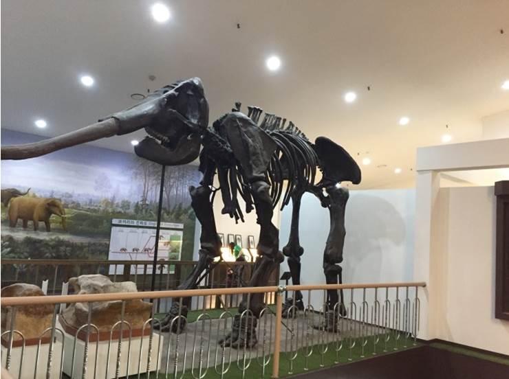 德沼自然史博物馆
