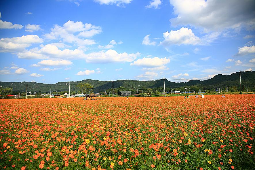 京畿道金秋10月庆典(1)