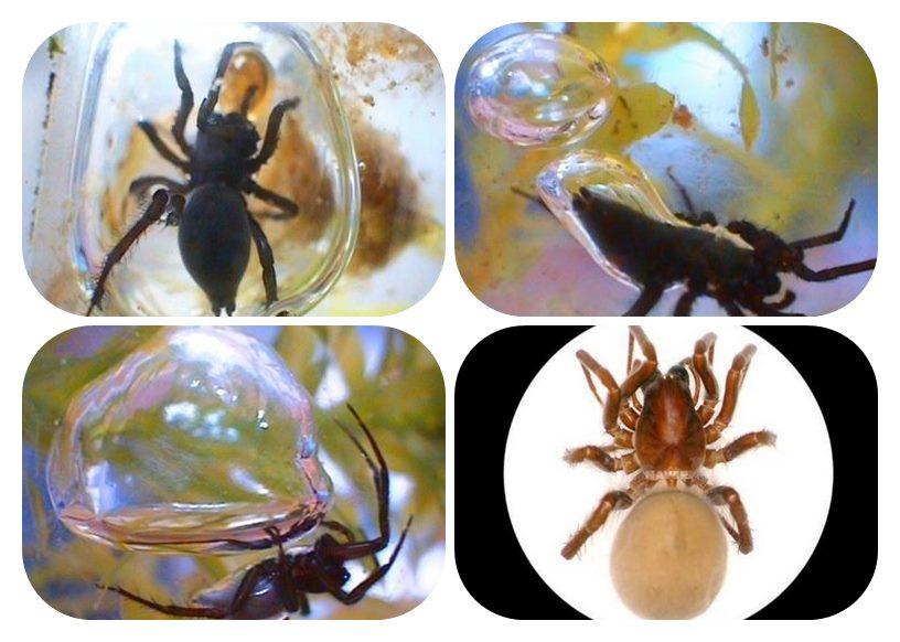 隱垈里水蛛棲息地(은대리 물거미 서식지)
