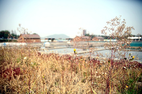 始興浦洞鹽田、始興芳山洞鹽田(시흥 소래 염전)